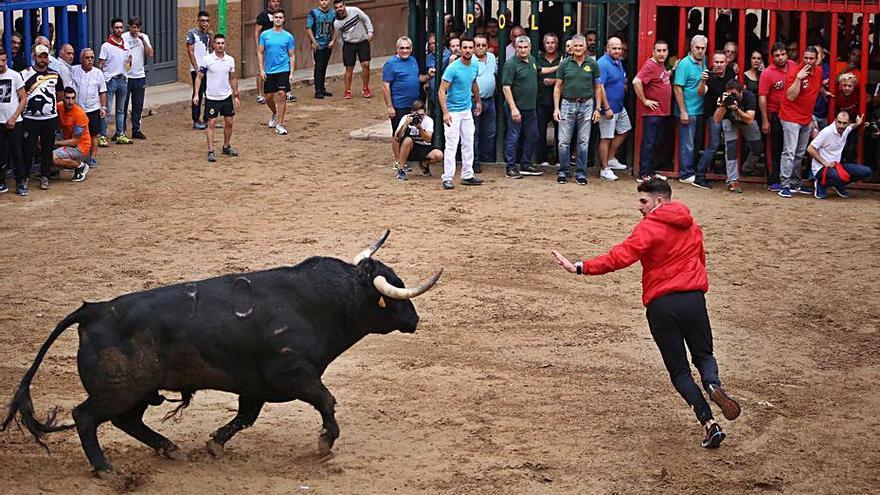 Las peñas taurinas de  27 municipios piden celebrar 'bous al carrer' en octubre
