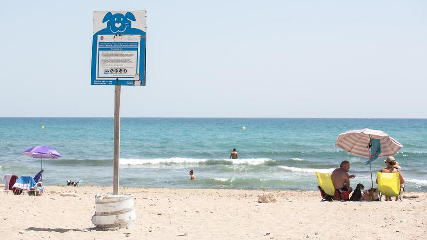 Compromís denuncia el abandono de la playa canina de Agua Amarga