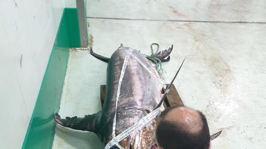 Un pez espada de 245 kilos, decomisado en A Coruña