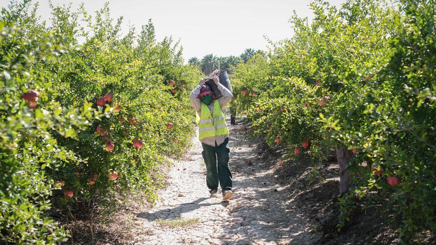 Veïns Alerta denuncia robos en las plantaciones de granados