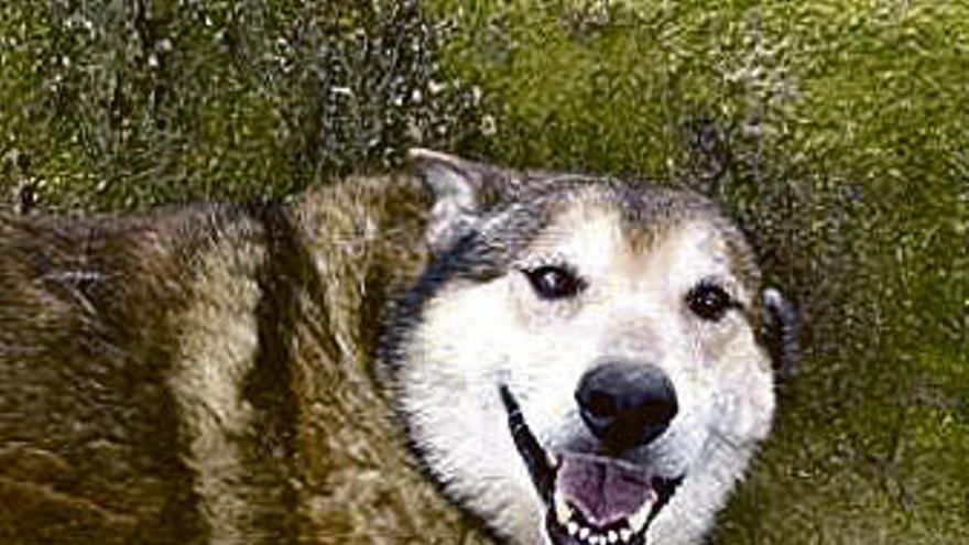 Esto es lo que, según la medicina veterinaria, tienes que hacer si tu perro ha ingerido algo envenenado