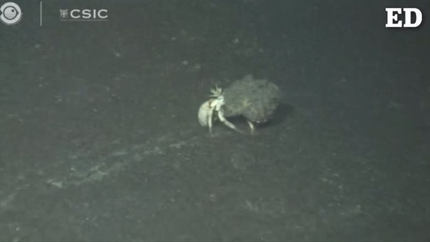 La vida marina se abre paso cerca de la fajana de lava del nuevo volcán de La Palma