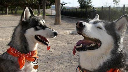 Los Mejores Lugares Donde Ir Con Tu Perro En La Provincia De Alicante