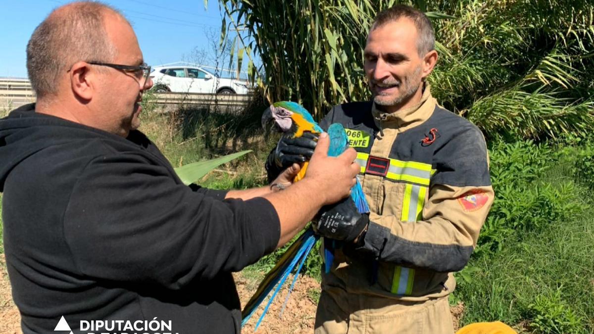 Momento en el que un bombero entrega el guacamayo a su propietario.