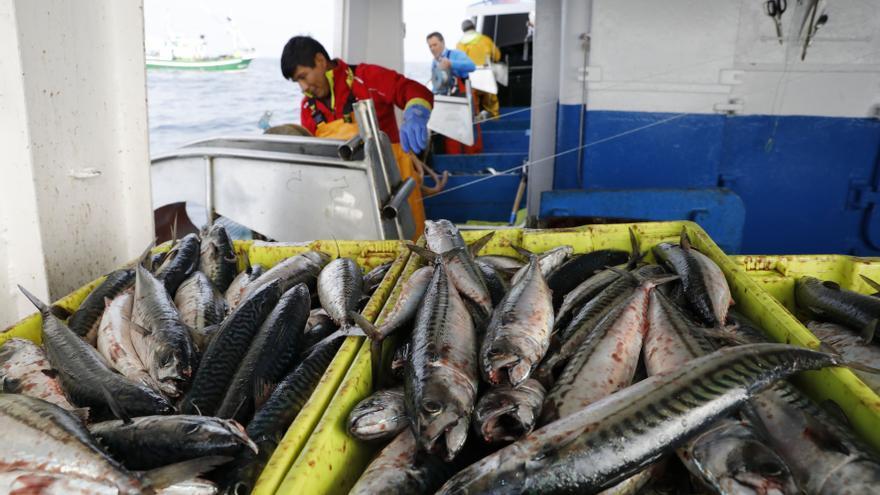 Europa aprieta las tuercas a los pescadores