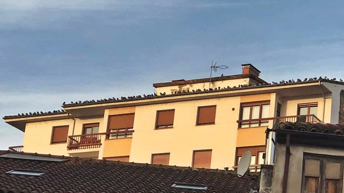 Decenas de palomas sobre el alero de un edificio del casco urbano de Pravia. | R. A. I.