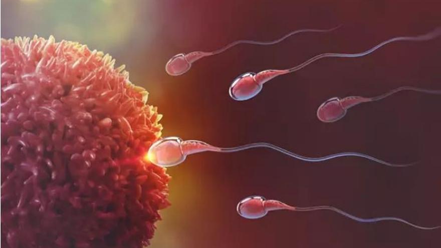 Abren una nueva vía de investigación en busca de nuevas terapias reproductivas
