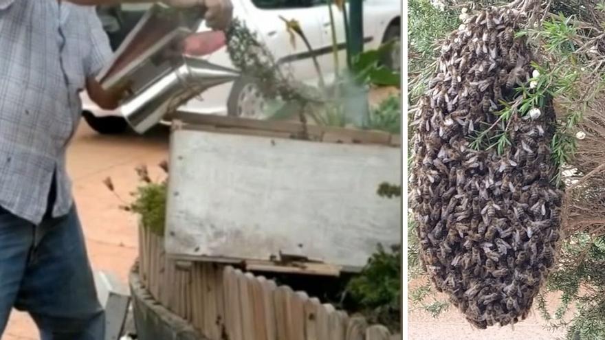 Las abejas que hicieron un panal en una vivienda de Vigo ya han cambiado de hogar