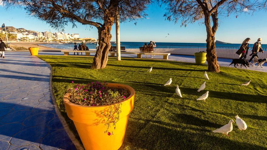 Benidorm inicia la consulta ciudadana para elegir las plantas que lucirán en el paseo de Poniente