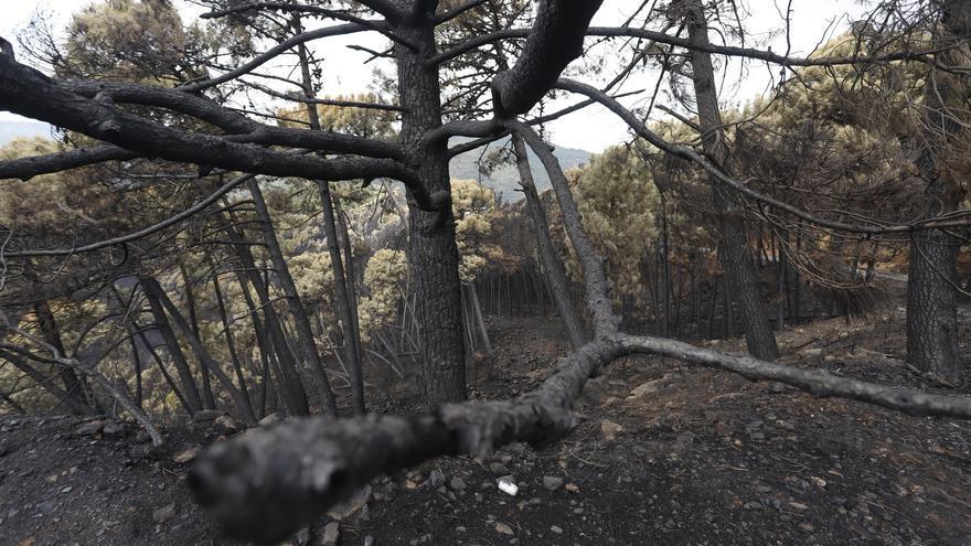 Piden ampliar a Sierra Bermeja la declaración de Parque Nacional