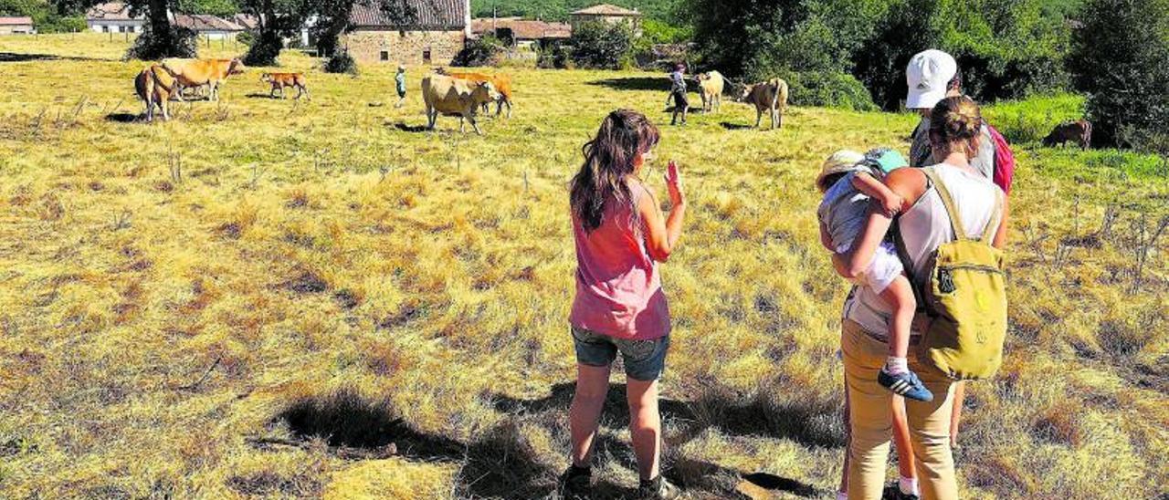 Una familia llega a la finca La Pastiza (Valderredible, Cantabria), donde realiza sus prácticas en la Escuela de Pastoras   Activos