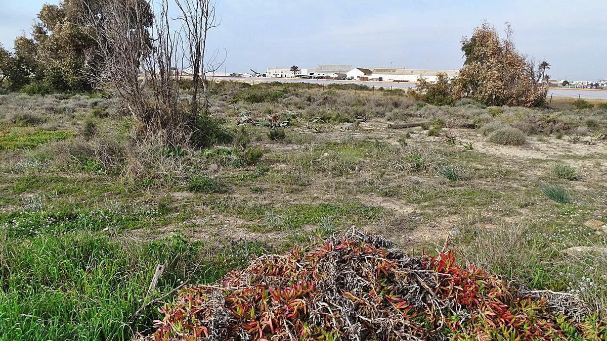 Voluntarios y operarios de ANSE retiran las especies invasoras en el Parque Regional de Salinas y Arenales de San Pedro del Pinatar. | ANSE
