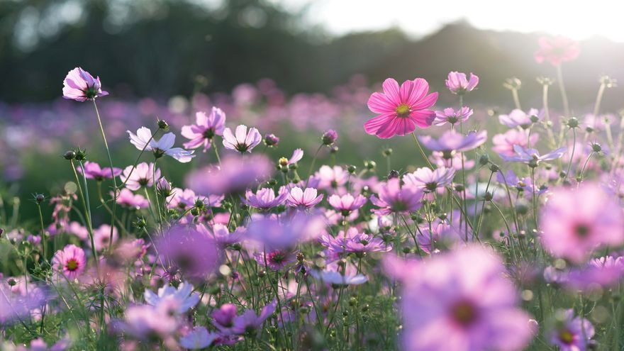 Desvelado el gran secreto de las flores: descubren cómo se forman sus estigmas