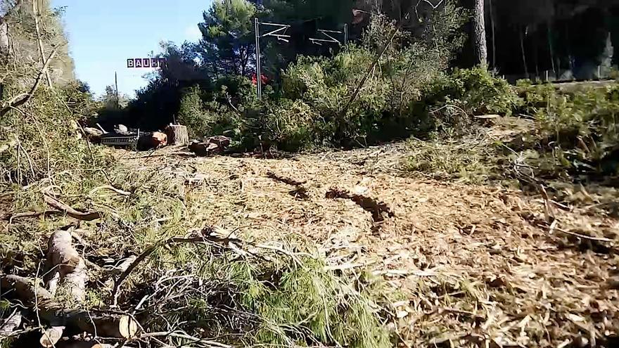 Así se talaron los pinos del corredor ferroviario de Marratxí