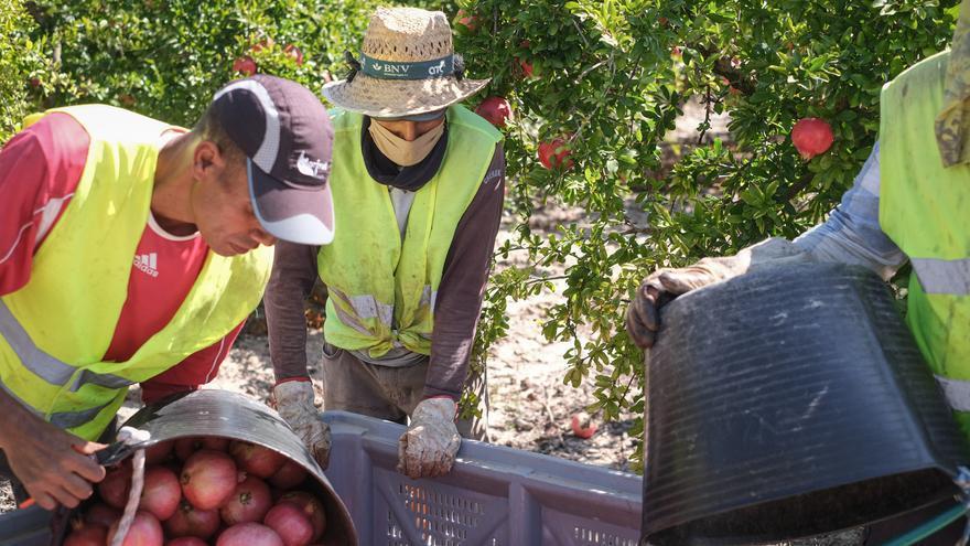 """""""De lo que se come se cría"""", la campaña en redes para potenciar la agricultura del Camp d'Elx"""