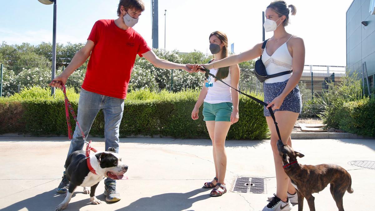 Sergio Carranza, de Dingo, recogiendo a dos de sus huéspedes caninos.