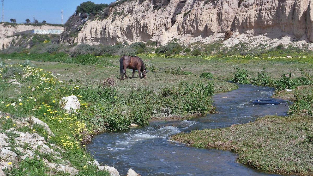 El río Seco, en su tramo entre el puente de la A-70 y su desembocadura, se va a incluir dentro del Catálogo de Zonas Húmedas de la Comunidad. | J.A.RICO