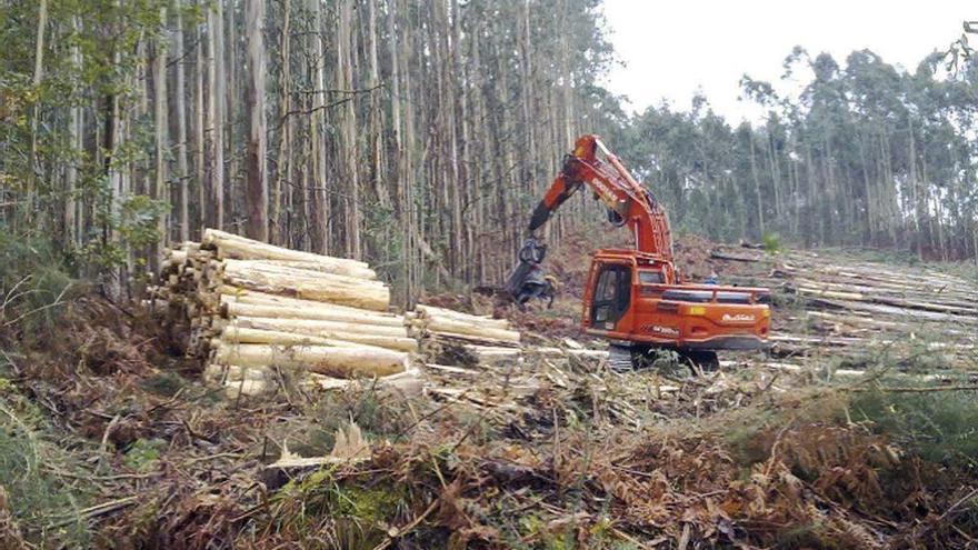 Ence, la principal fuente de ingresos de los propietarios forestales gallegos
