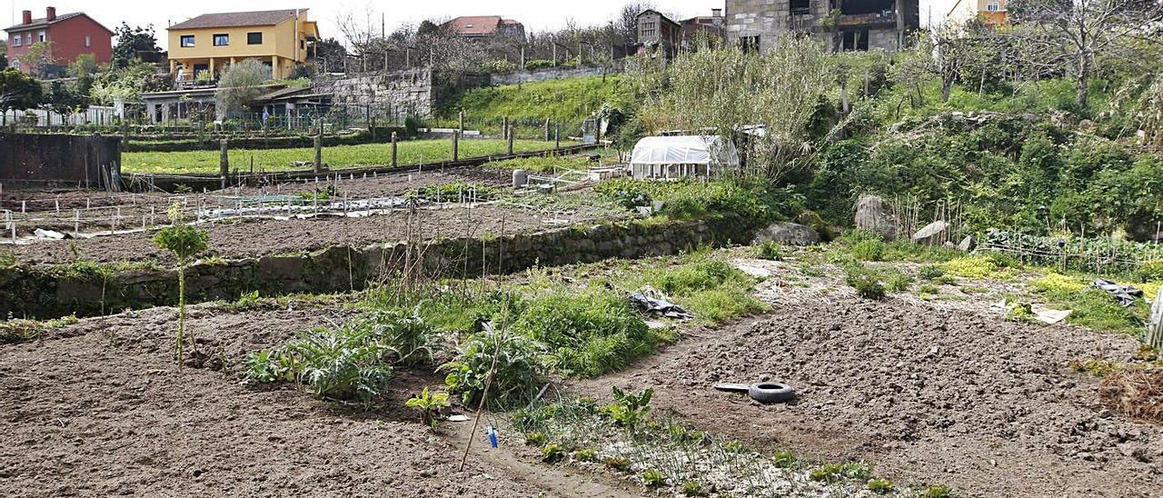 Varias fincas cultivadas en la parroquia de Matamá (Vigo).