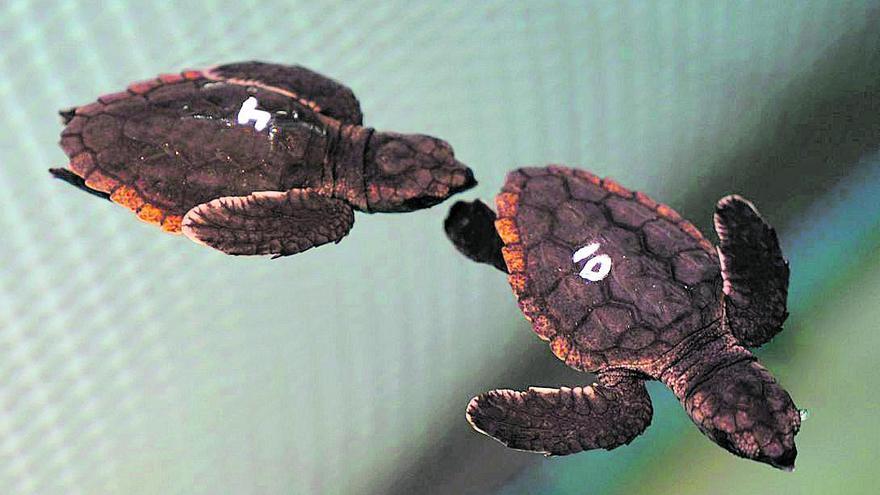La tortuga que volia viure