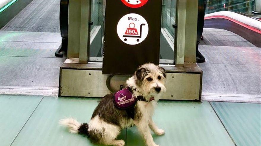 Expulsan a un pasajero de un avión que se dirigía a Canarias por ir con su perro de asistencia