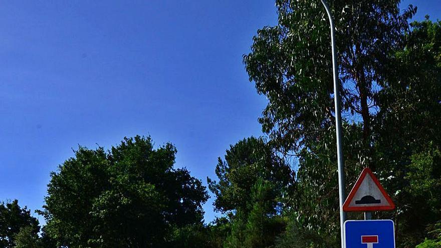 Moaña contrata la limpieza del talud de la rúa Centoleira y tala tres de las grandes palmeras de O Con