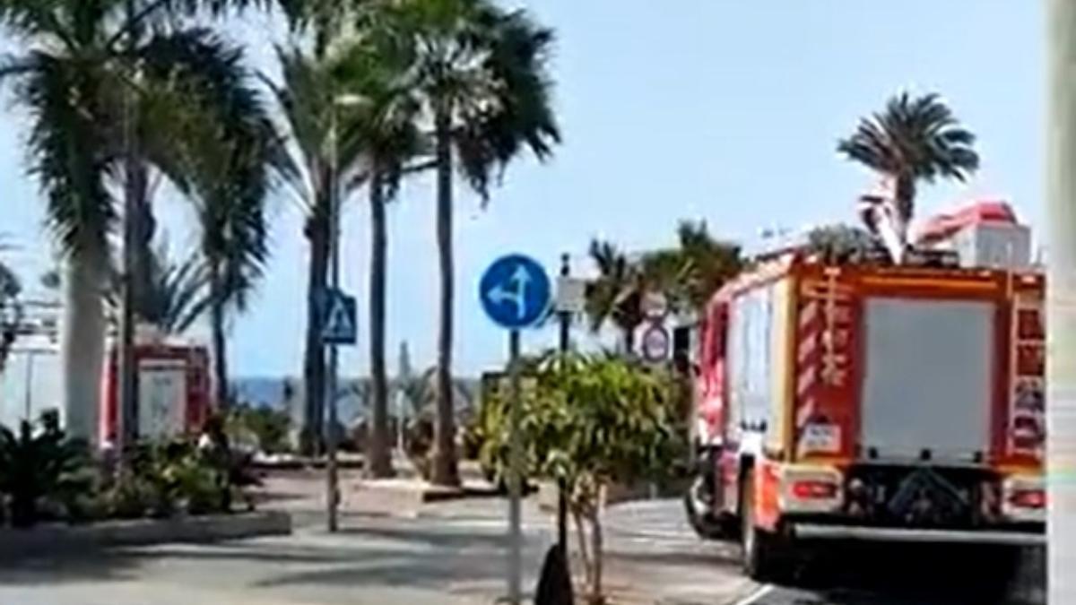 Una mujer herida grave y dos leves al caer un palmera en el sur de Tenerife