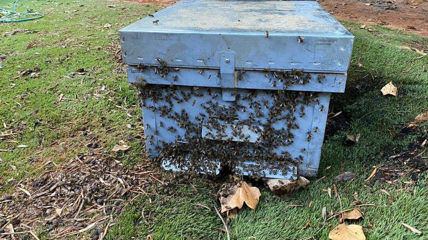 Los Bomberos retiran una colmena con miles de abejas en la Playa de San Juan