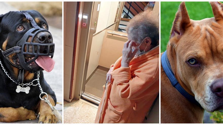 Así fueron los ataques de perros a personas más sonados de la última década en Vigo