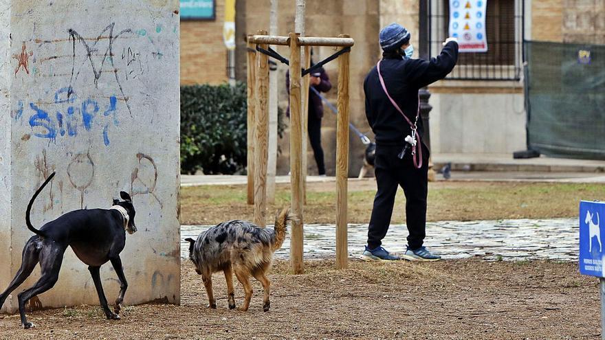 Incívicos paseadores caninos