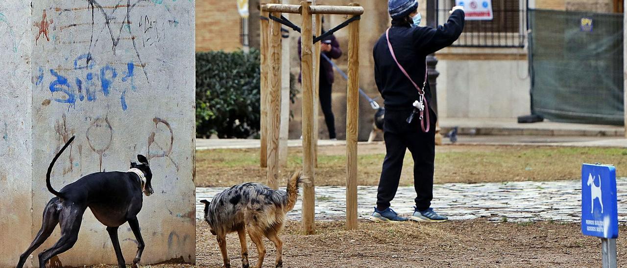Dos perrros sueltos por el parque del antiguo Hospital que recae a la calle de Guillem de Castro. | E.RIPOLL