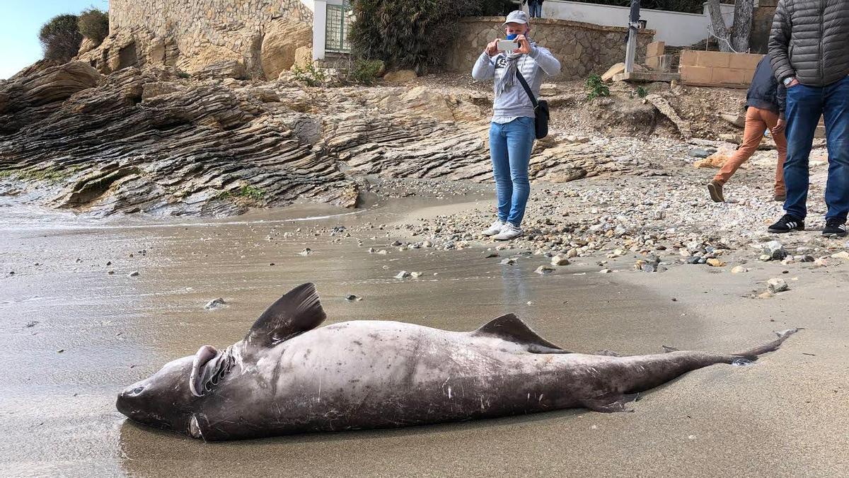 Varias personas, junto al cadáver del tiburón en la playa de Sant Elm
