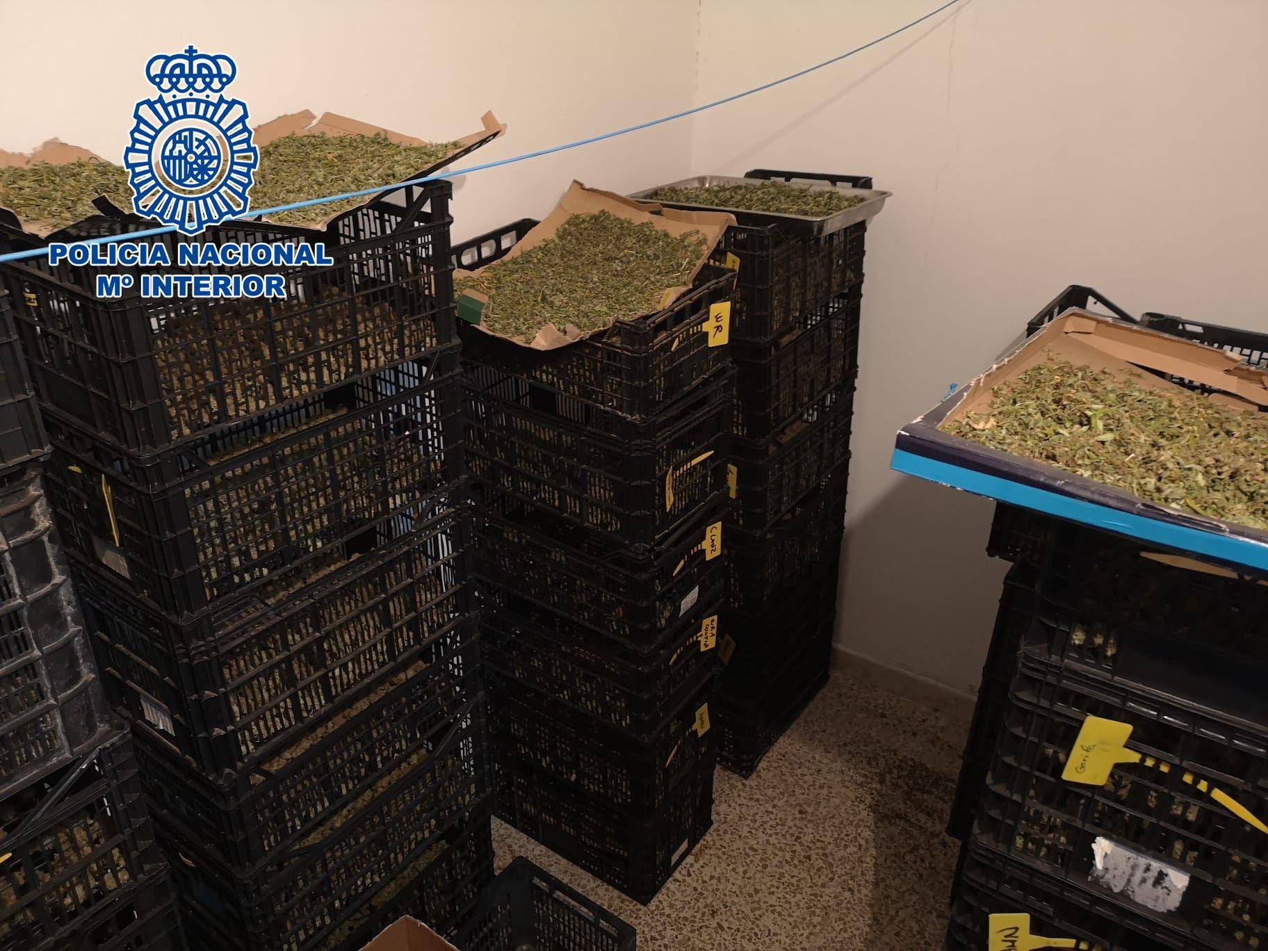 La Policía detecta por el olor en un almacén una plantación de marihuana