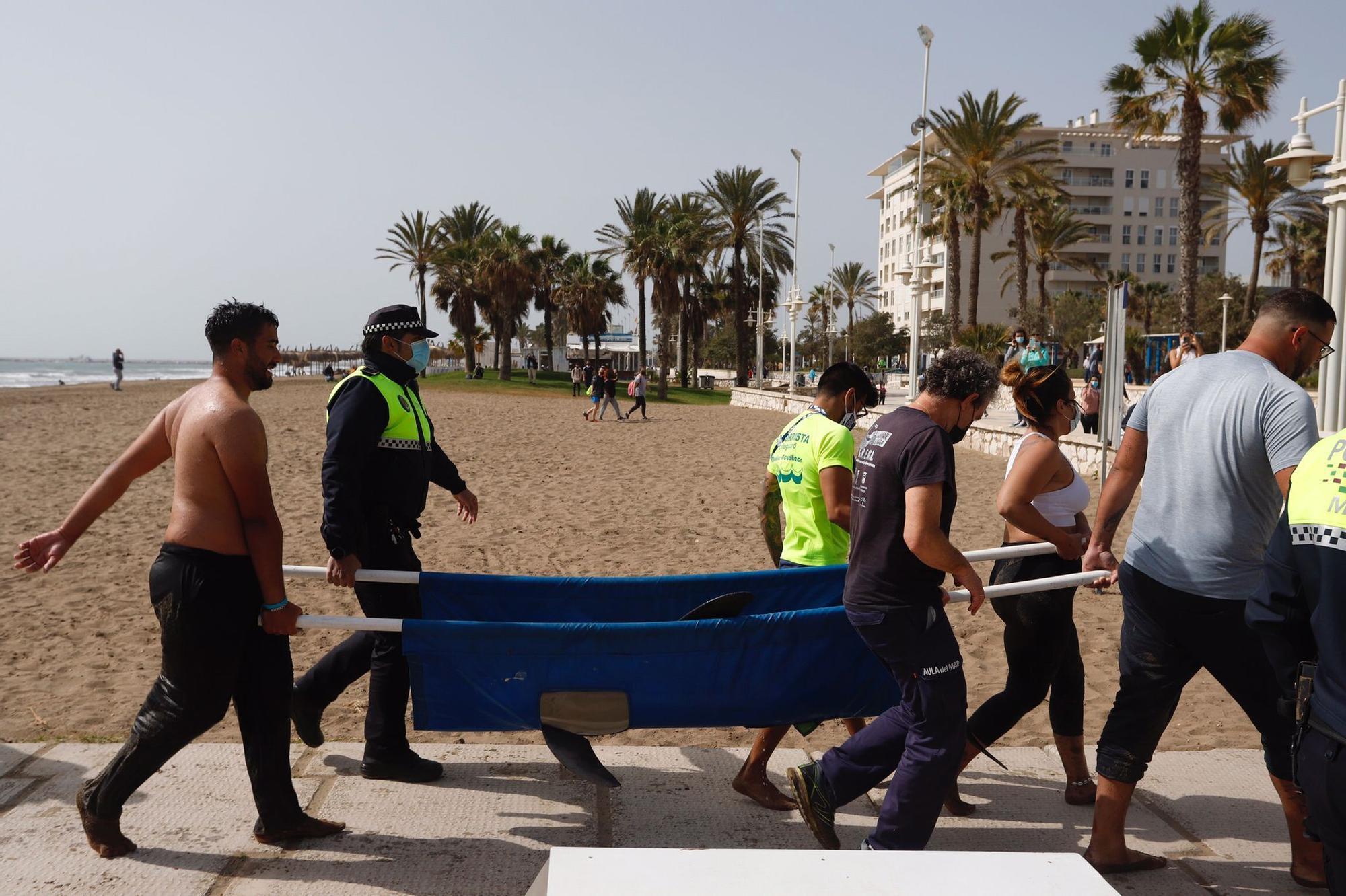 Rescatan a un delfín varado en la Misecordia
