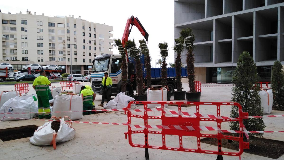 Los operarios de Infraestructuras en plena faena de siembra de plantas en el entorno del Palacio de Congresos.