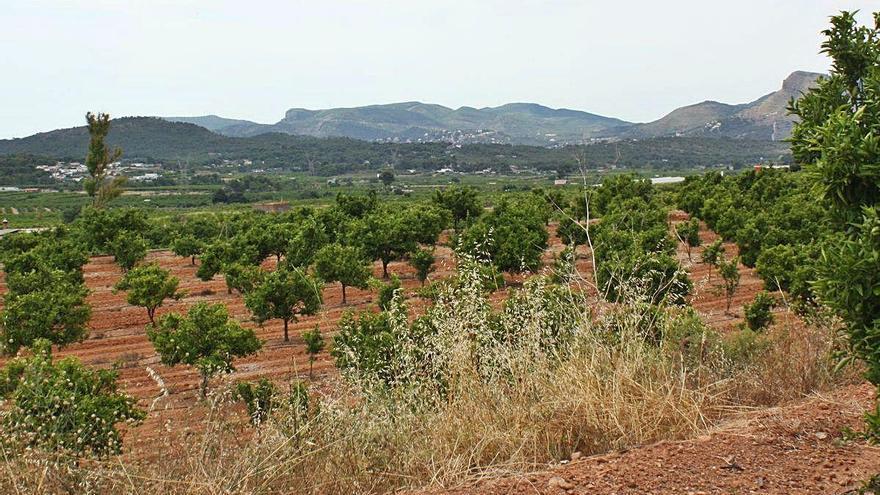 La agricultura gana terreno en Morvedre por primera vez en 15 años