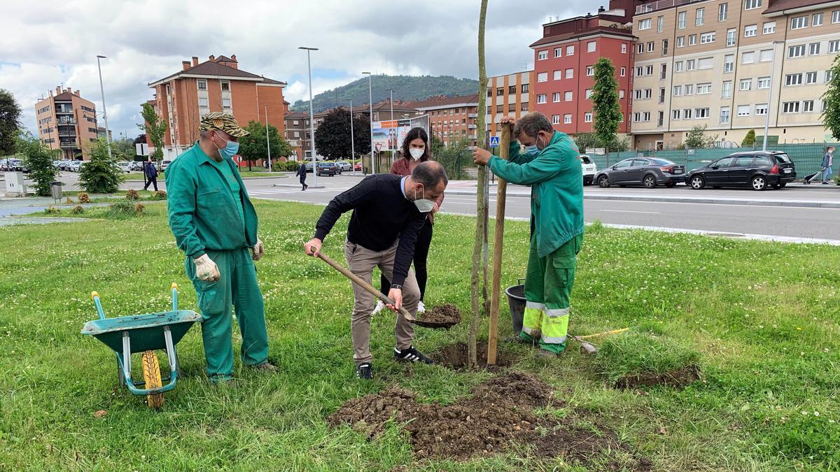El alcalde, Ángel García, plantando un árbol en Lugones, hace unas semanas