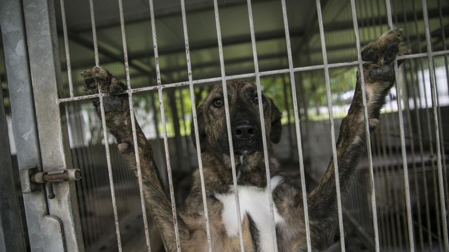 PSOE exige un nuevo concurso para la gestión del albergue de animales de Oviedo