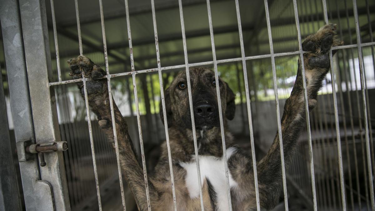 El perro Albano en el albergue de animales de La Bolgachina.