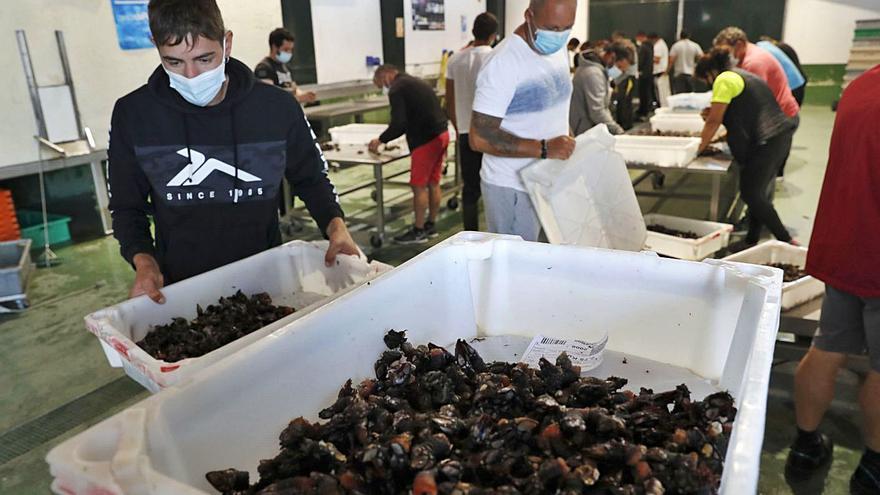 Baiona lidera la guerra al furtivismo en los juzgados gallegos con 5 procesos abiertos