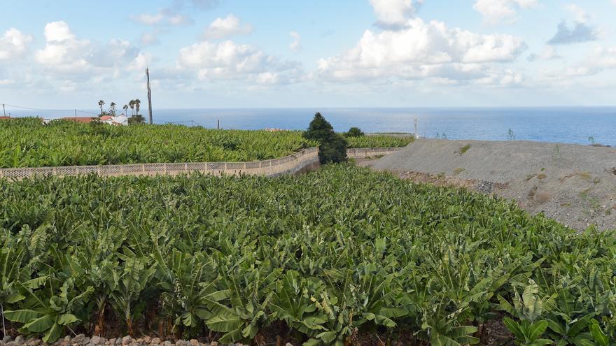 Los plataneros esperan el 'indulto' de Planas en su visita a las Islas