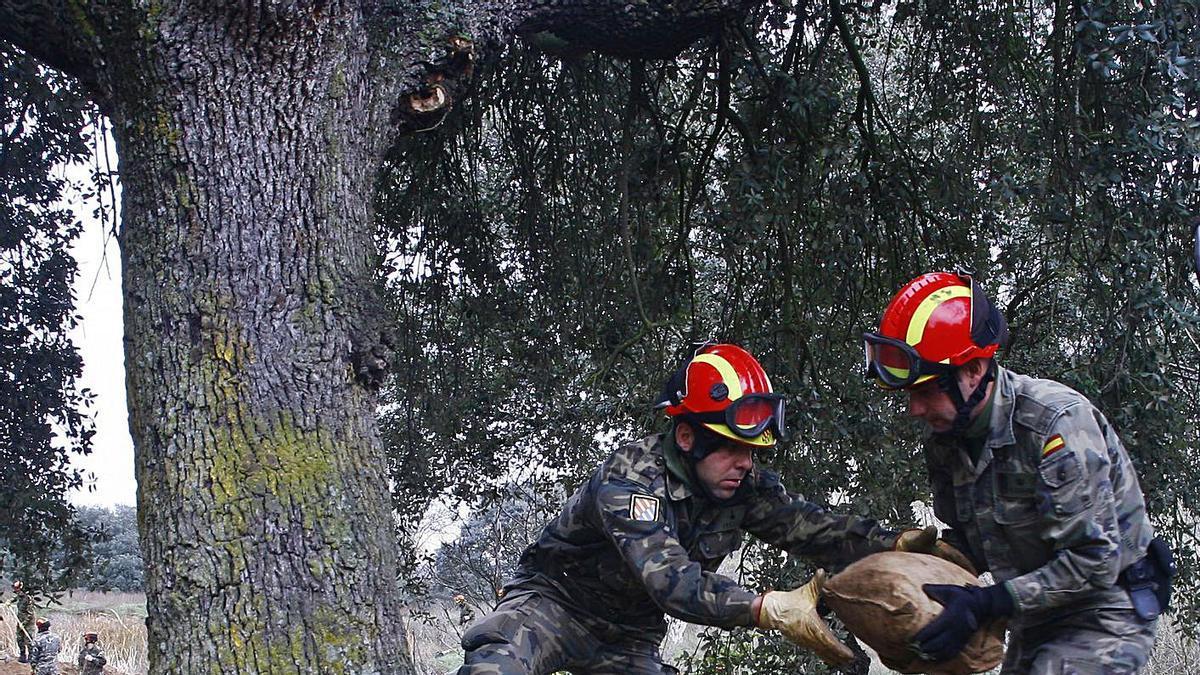 Maniobras militares en Monte la Reina. | LOZ