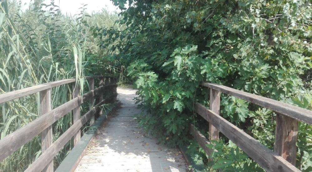 La suciedad invade el Parque Fluvial del Túria a su paso por Riba-roja
