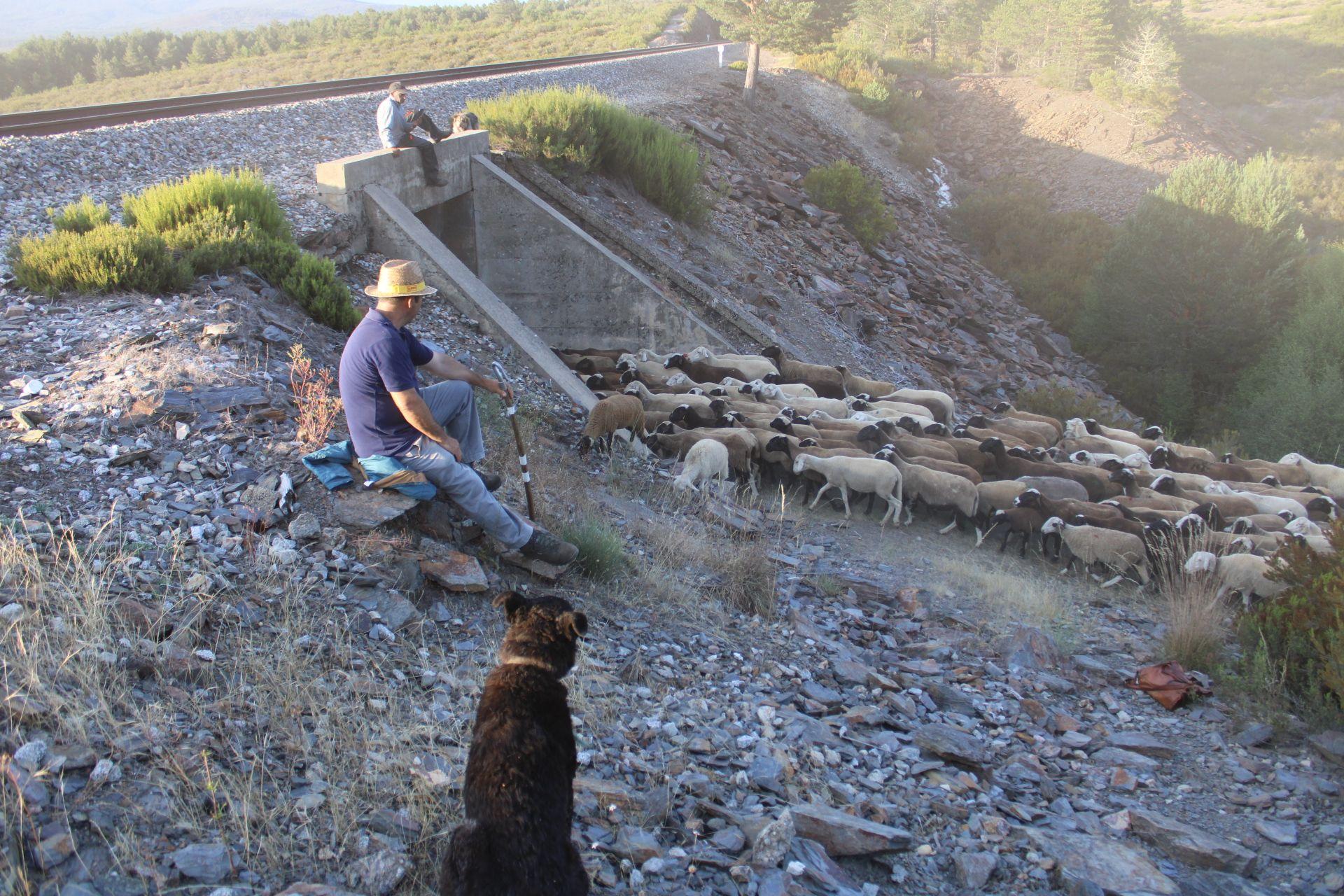 Los pastores esperan a que la cabaña termine de pasar bajo la vía.