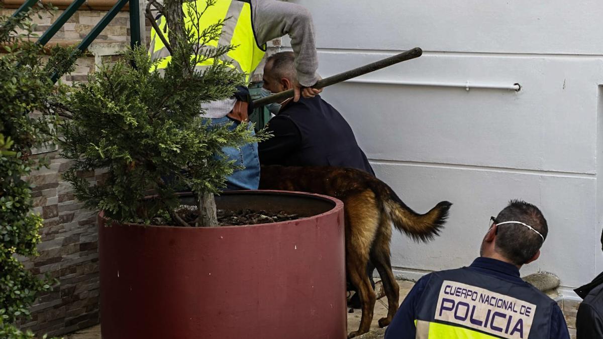 Un perro entrenado accede a la vivienda del cargo en busca de pruebas.