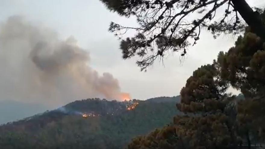 Incendio forestal en Jubrique