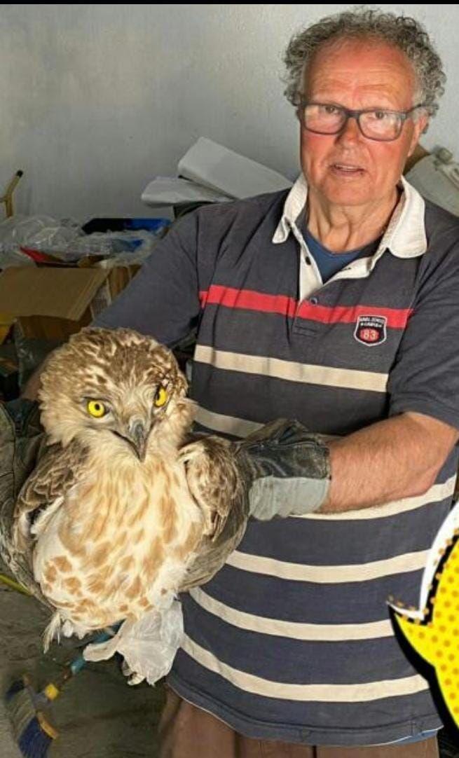 Imagen de Rosendo Albert con el águila culebrera con la que se encontró este jueves en Cabanes.