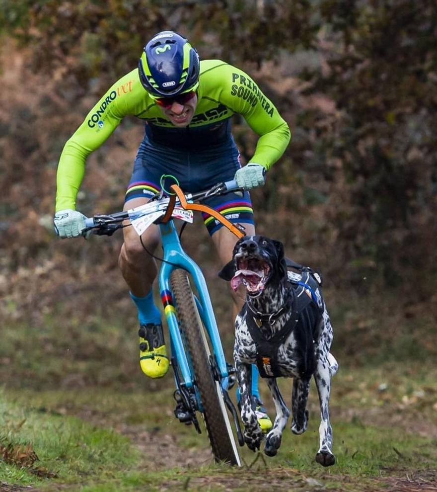 El corazón de los atletas caninos