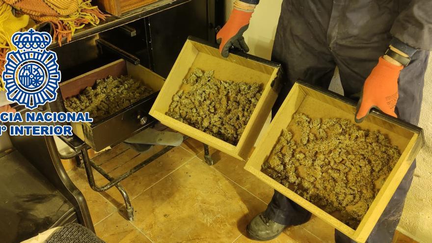 Detenido en Alicante por tener más de 160 plantas de marihuana en el salón de su casa