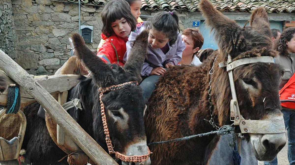 Varios niños juegan con asnos de la raza zamorano-leonesa. | Chany Sebastián
